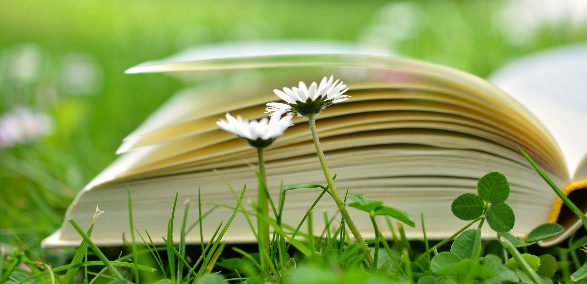 Ein Buch liegt aufgeschlagen auf einer Wiese. Davor 2 Gänseblümchen. Seminare